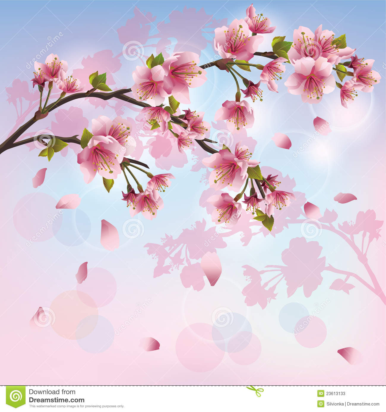 Sakura Blossom - Japanese Cherry Tree Background Stock Photos - Image ...