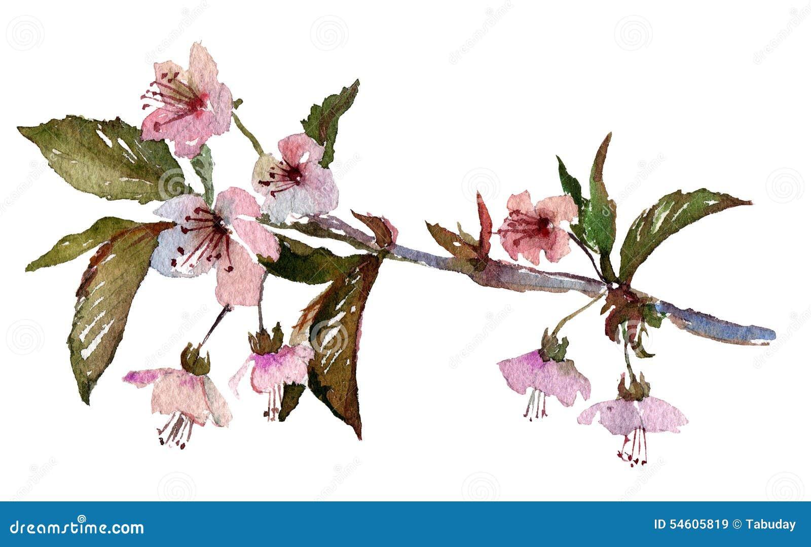 Sakura Branch Cherry Blossom With Pink Flowers Stock