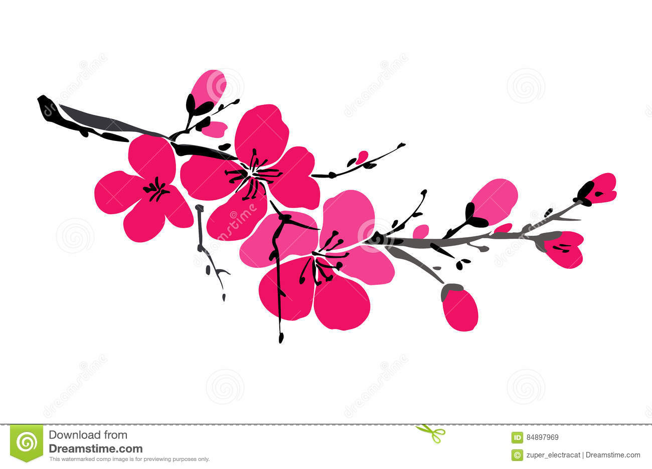 Sakura branch isolated on white background. Spring background. Japanese cherry blossom. Blooming flowers