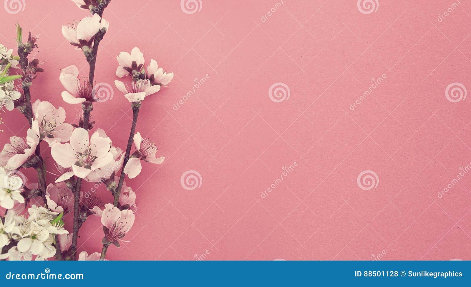 Sakura floreciente, primavera florece en fondo rosado con el balneario de la copia
