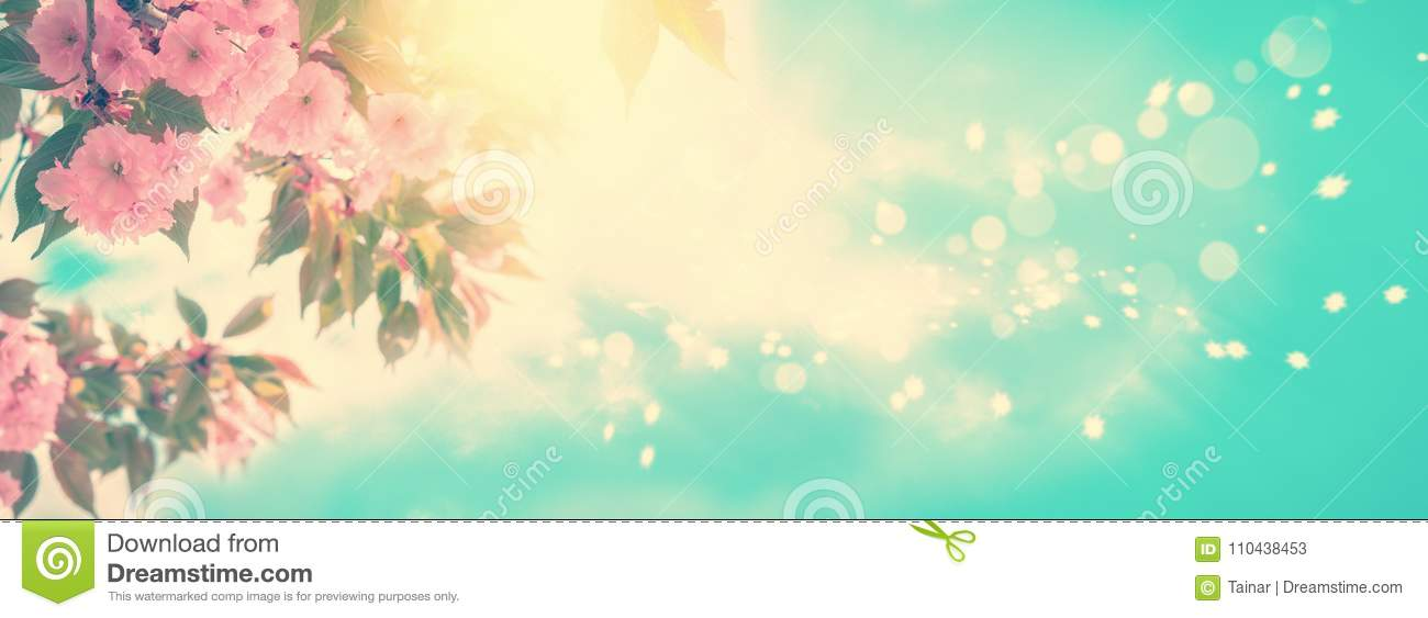 Sakura flower cherry blossom panoramic. Greeting card background template. Shallow depth. Soft vintage toned