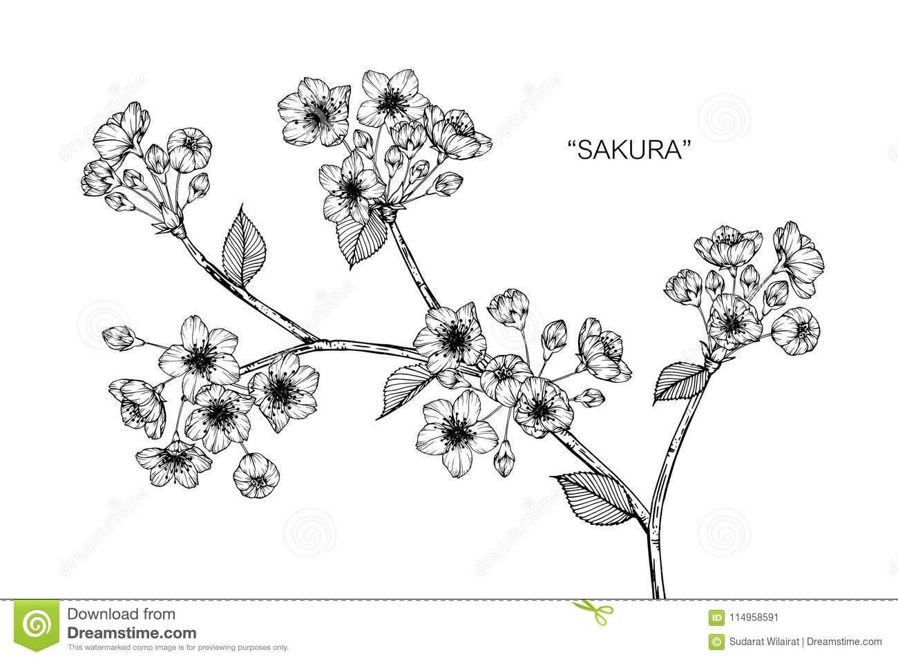 Sakura Flower Drawing Illustration Black And White With Line Art