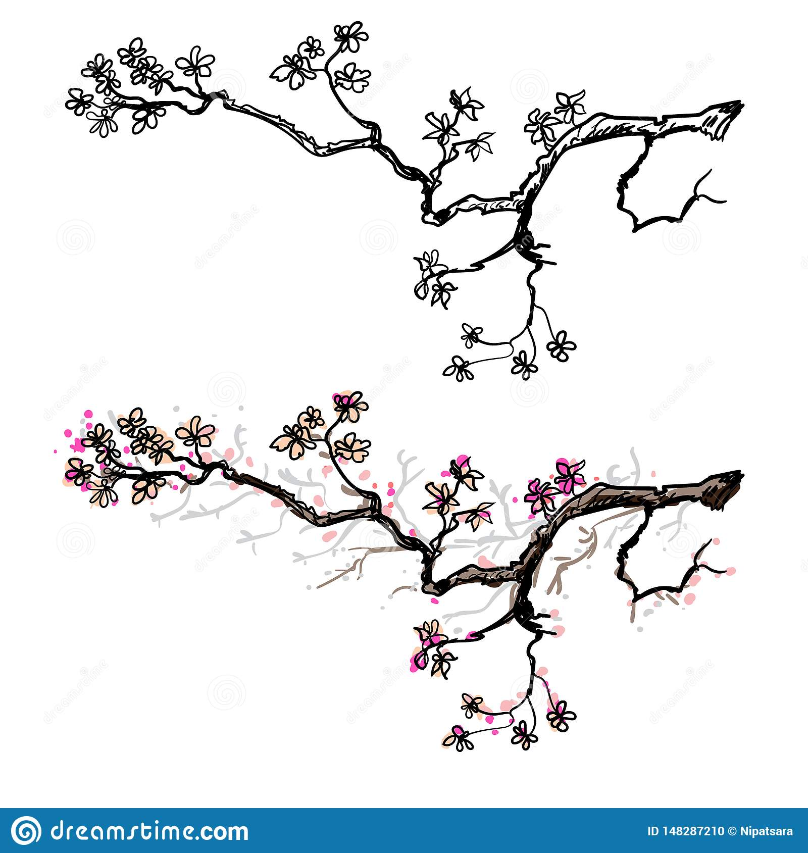 Cherry Blossom Flower Of Japan Outline And Silhouette Peach Blossom Stock Vector Illustration Of Japanese Blossom 148287210