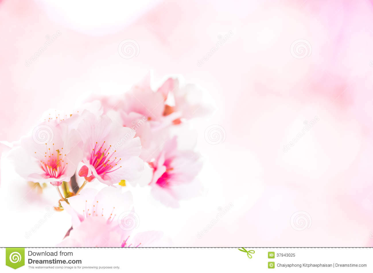 Spring flowering branches, pink flowers, no leaves, blossoms Almond ...