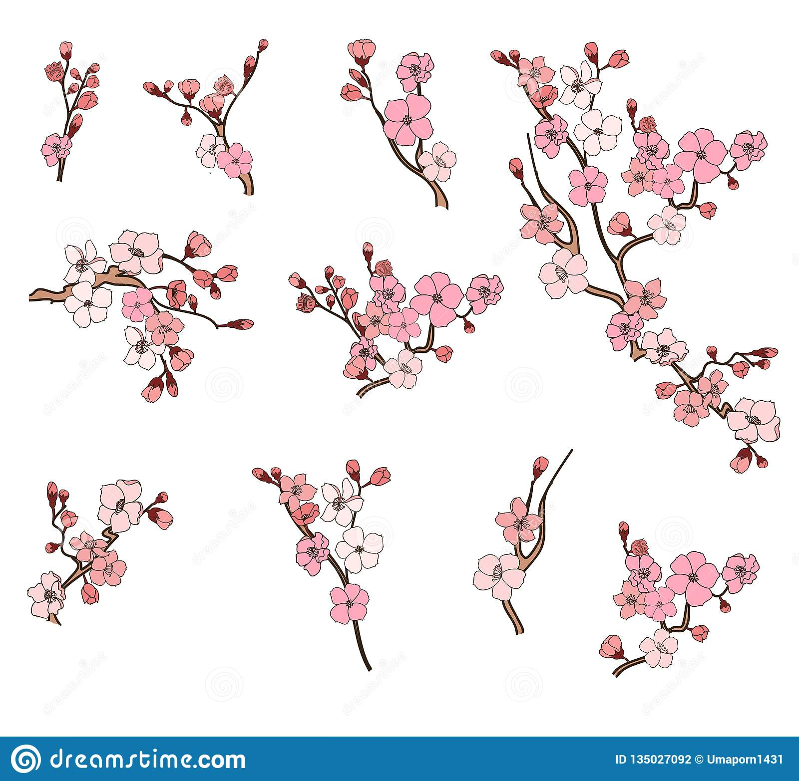 Cherry Blossom Vector And Illustration Design On White Background