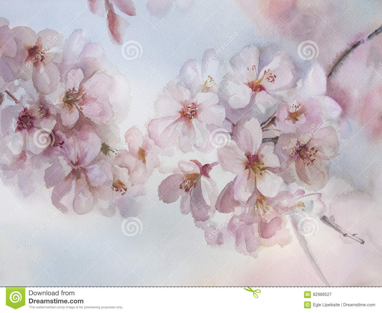 Sakura flower watercolor spring