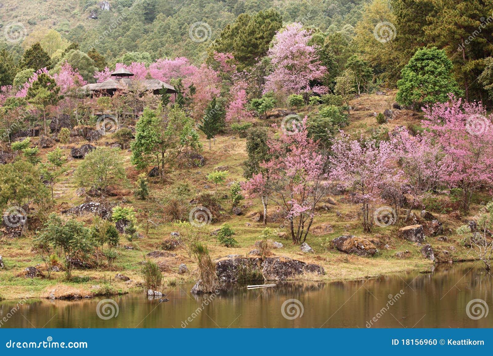 Sakura Garden Stock Photo Image 18156960