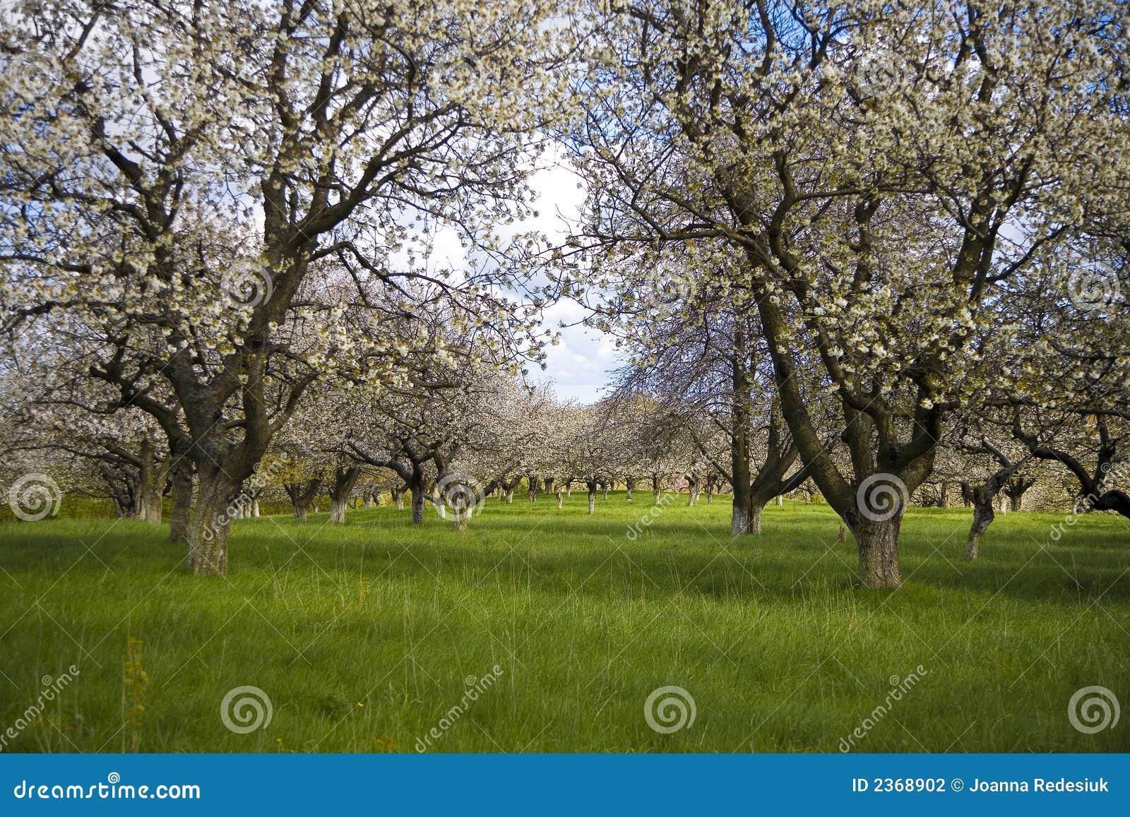 Sakura Garden Stock Photography Image 2368902