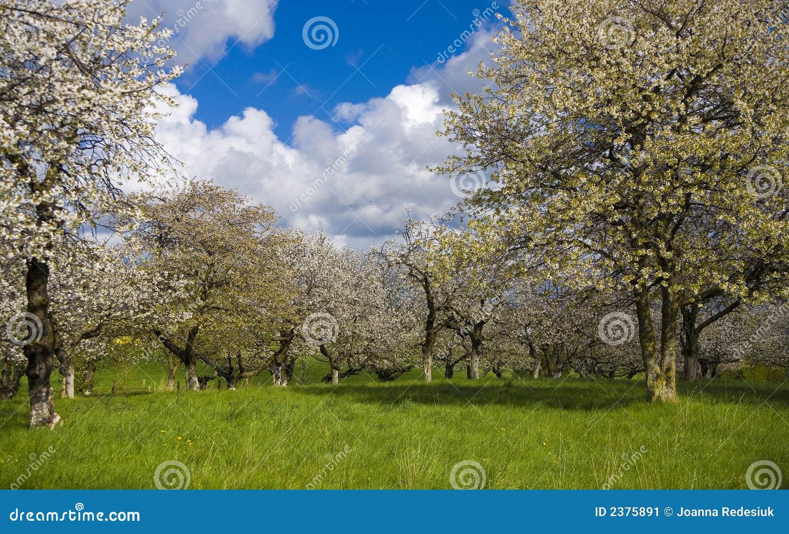 Sakura Garden Stock Image Image 2375891