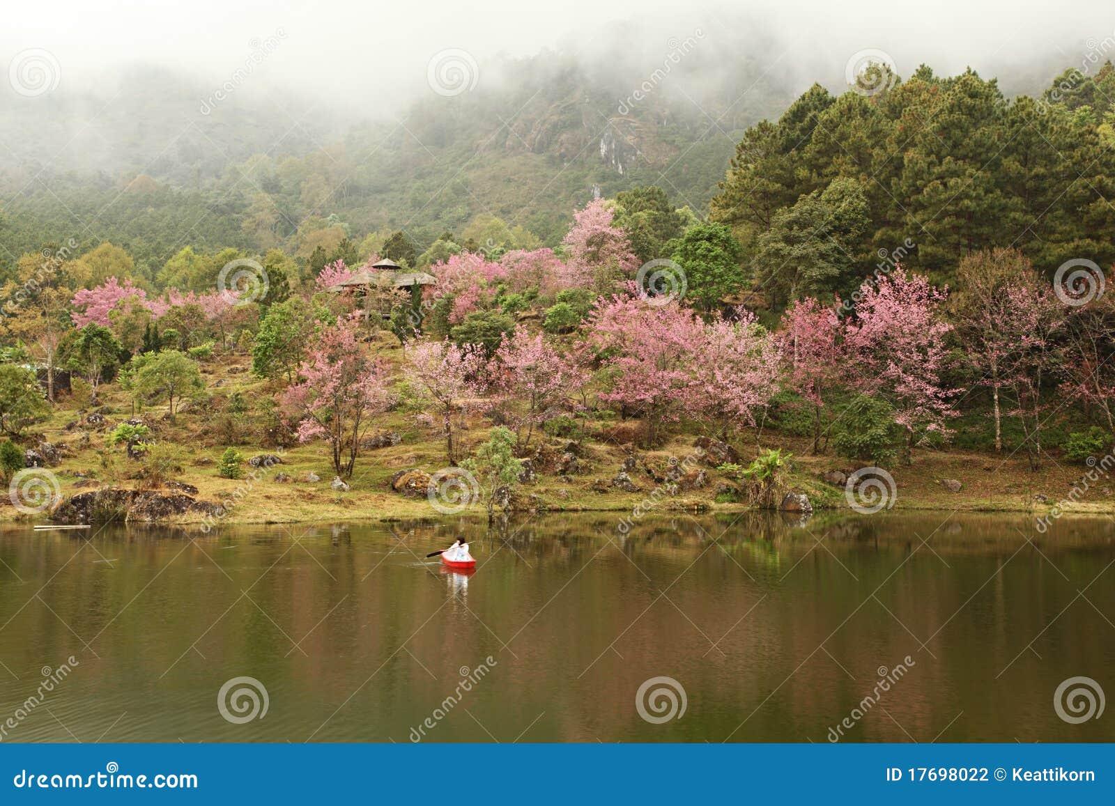 Sakura Garden And Lake Stock Photography Image 17698022