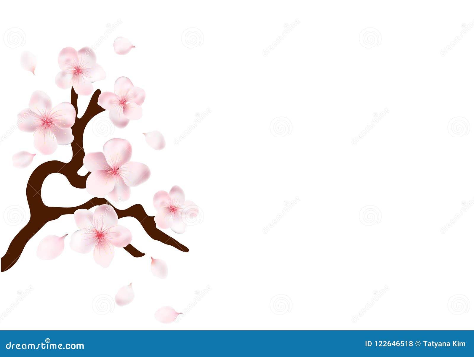 Sakura Japan blommar den körsbärsröda filialen med att blomma vektorillustrationen