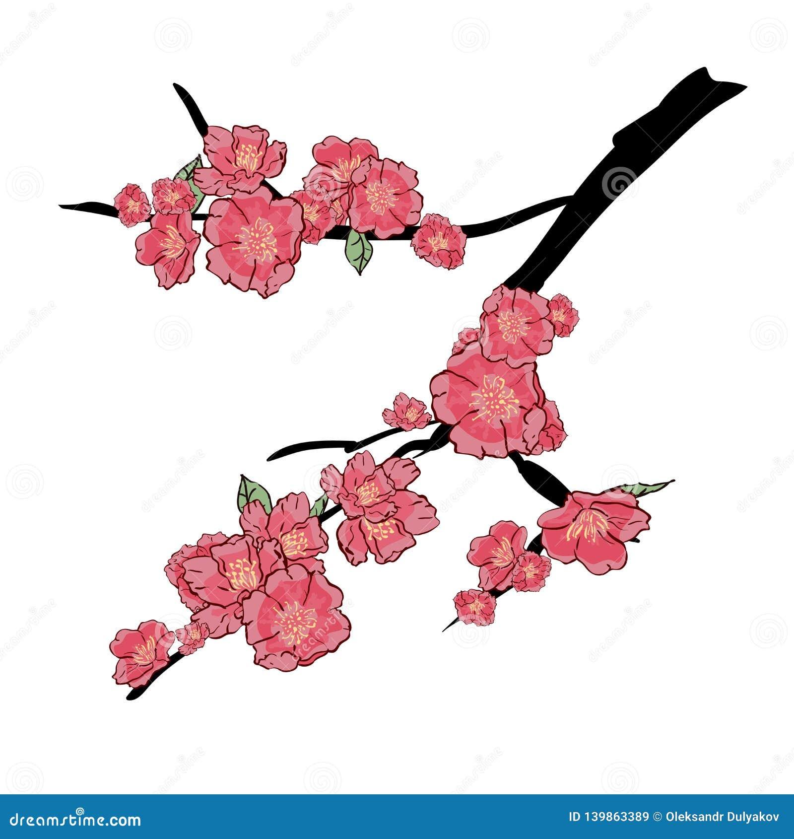 Sakura Japan wiśni gałąź z kwitnieniem kwitnie wektorową ilustrację Ręka rysunek, odizolowywający na białym tle