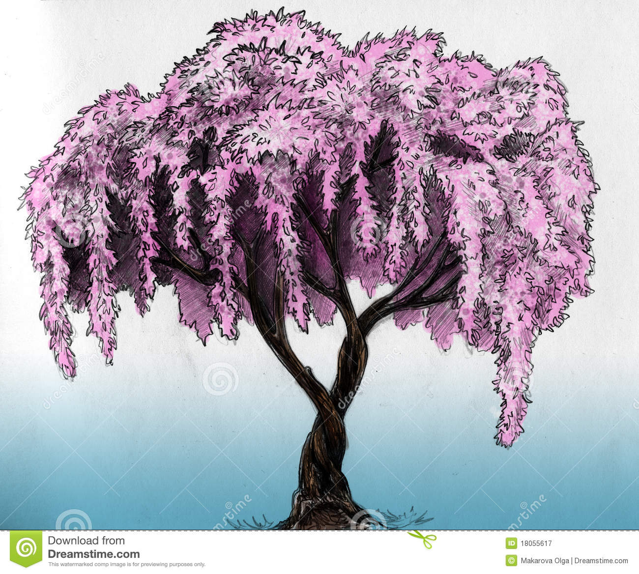 Sakura cherry plum of apple tree in blossom pencil drawing sketch colored