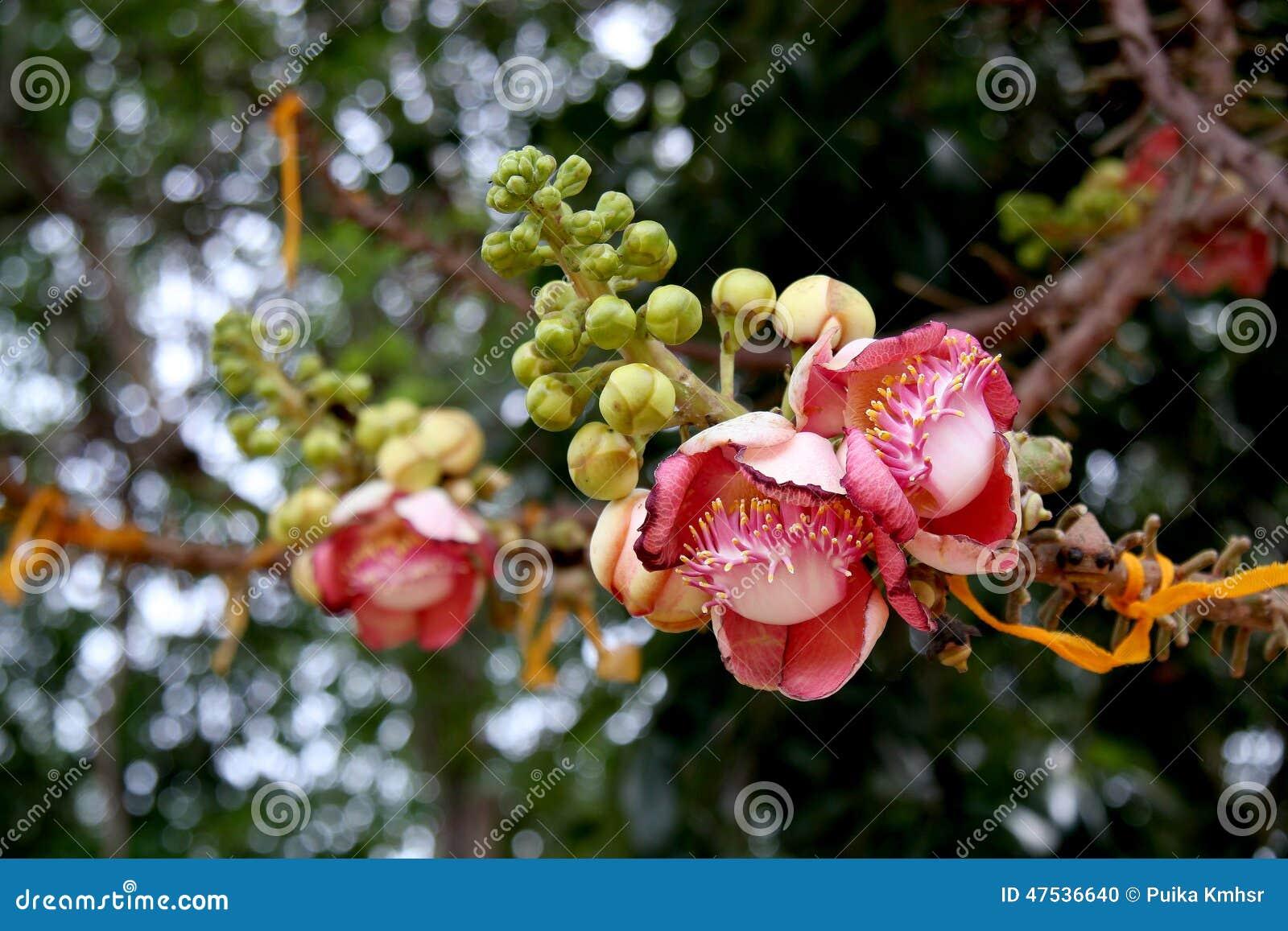 Sal Flower & Bokeh