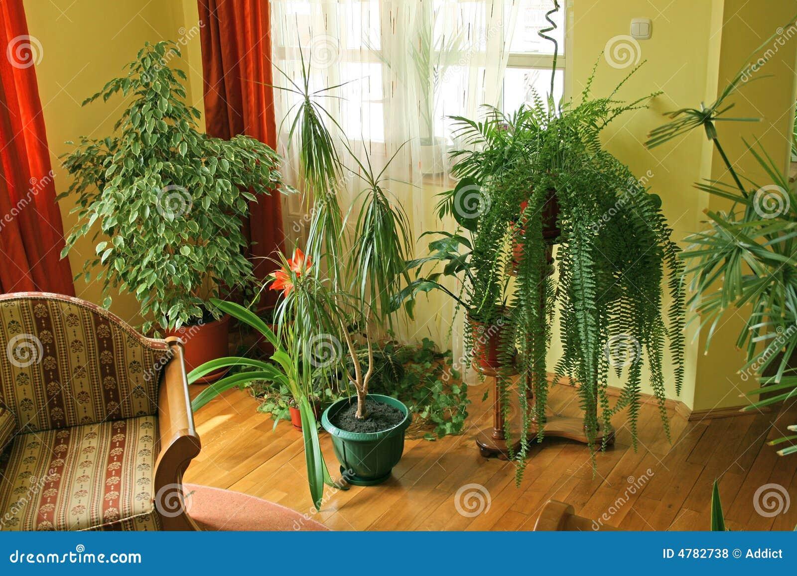 Sala de estar con las plantas verdes