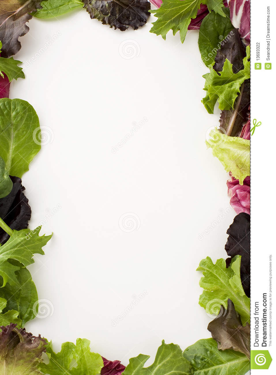 Salad Border Stock Photography Image 13693322