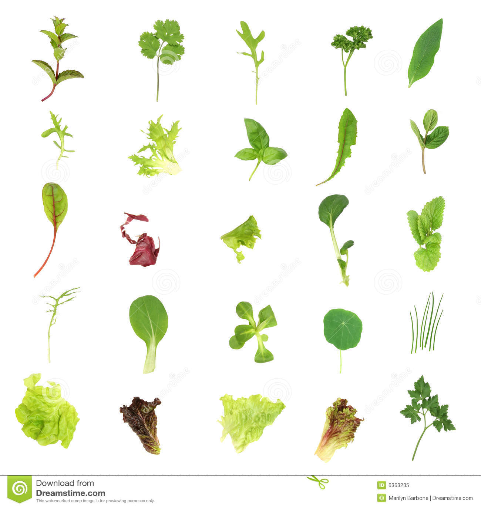 ... salad lettuce and herb leaves set over white background mr no pr no 4