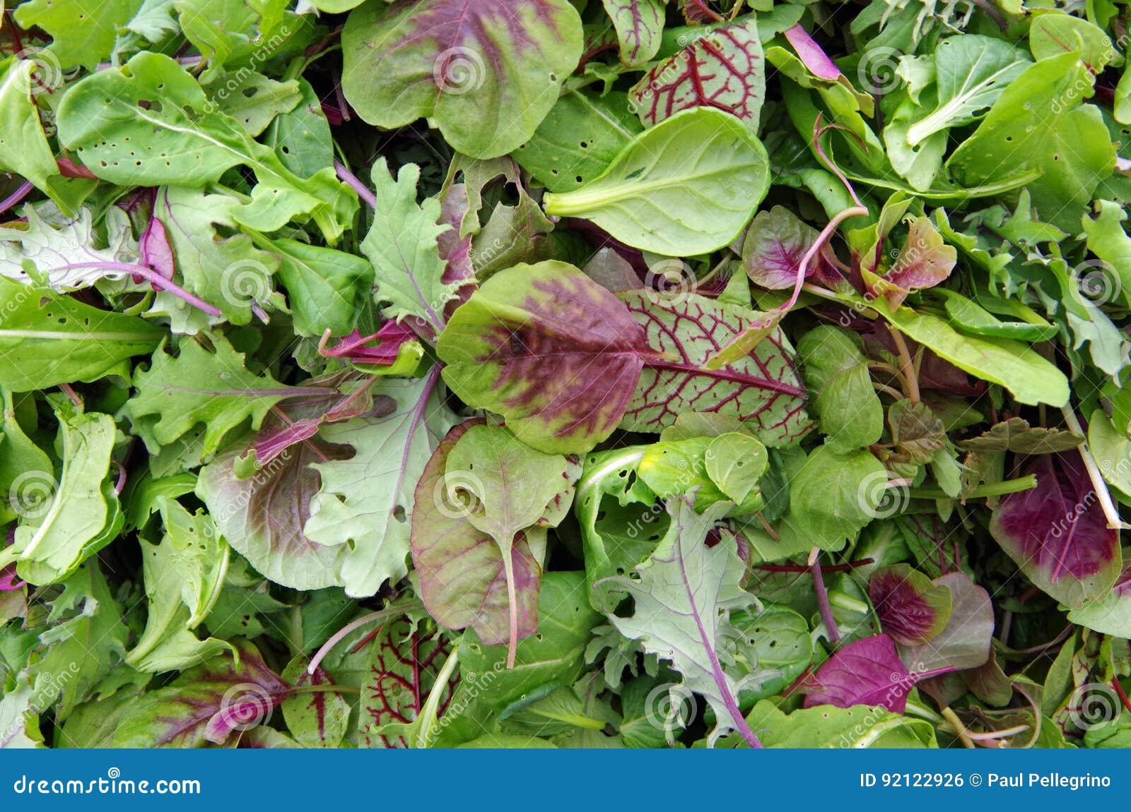 Salad micro greens