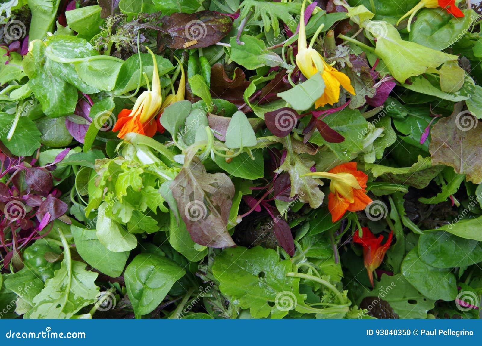 A salada de Mesclun esverdeia o close up