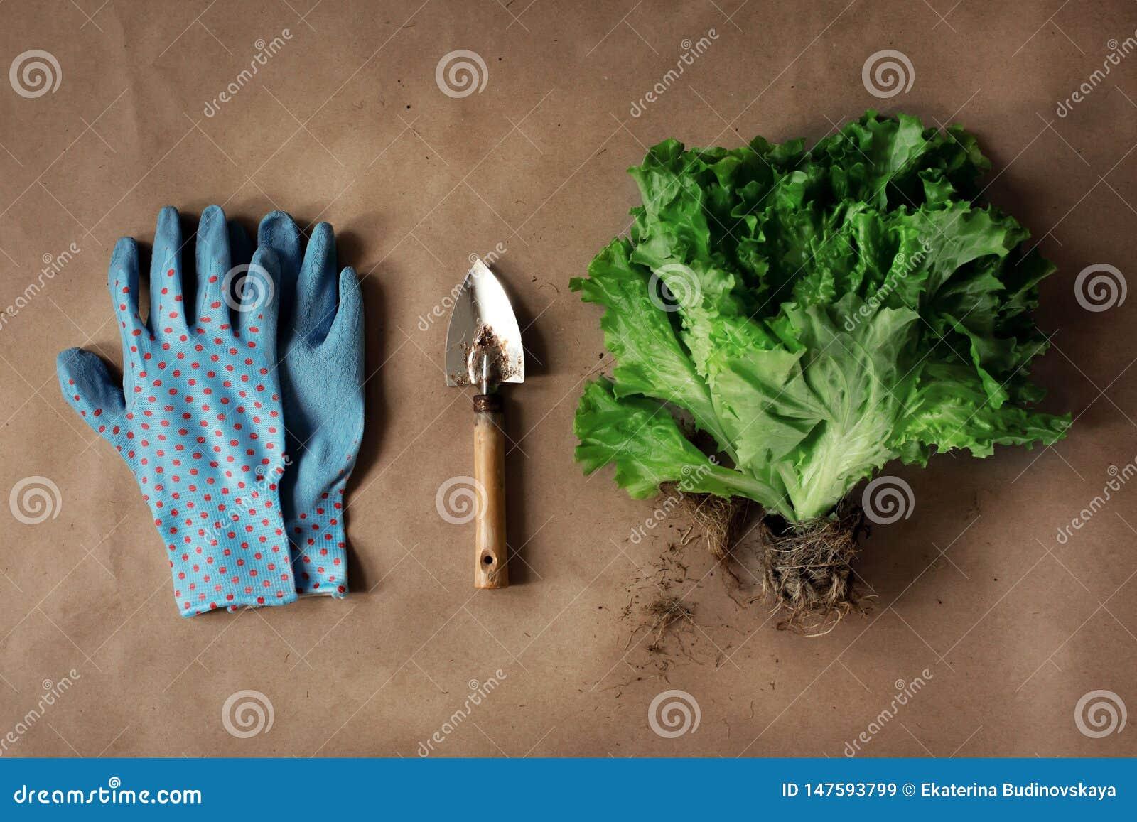 Salade de ferme avec des racines