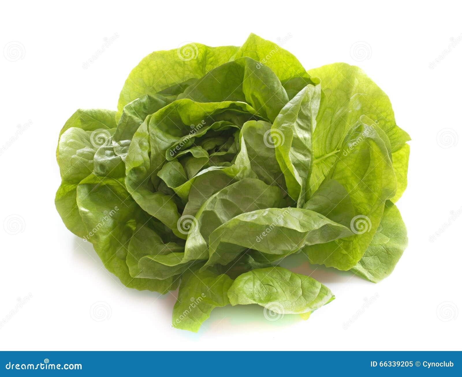Salade fraîche de laitue