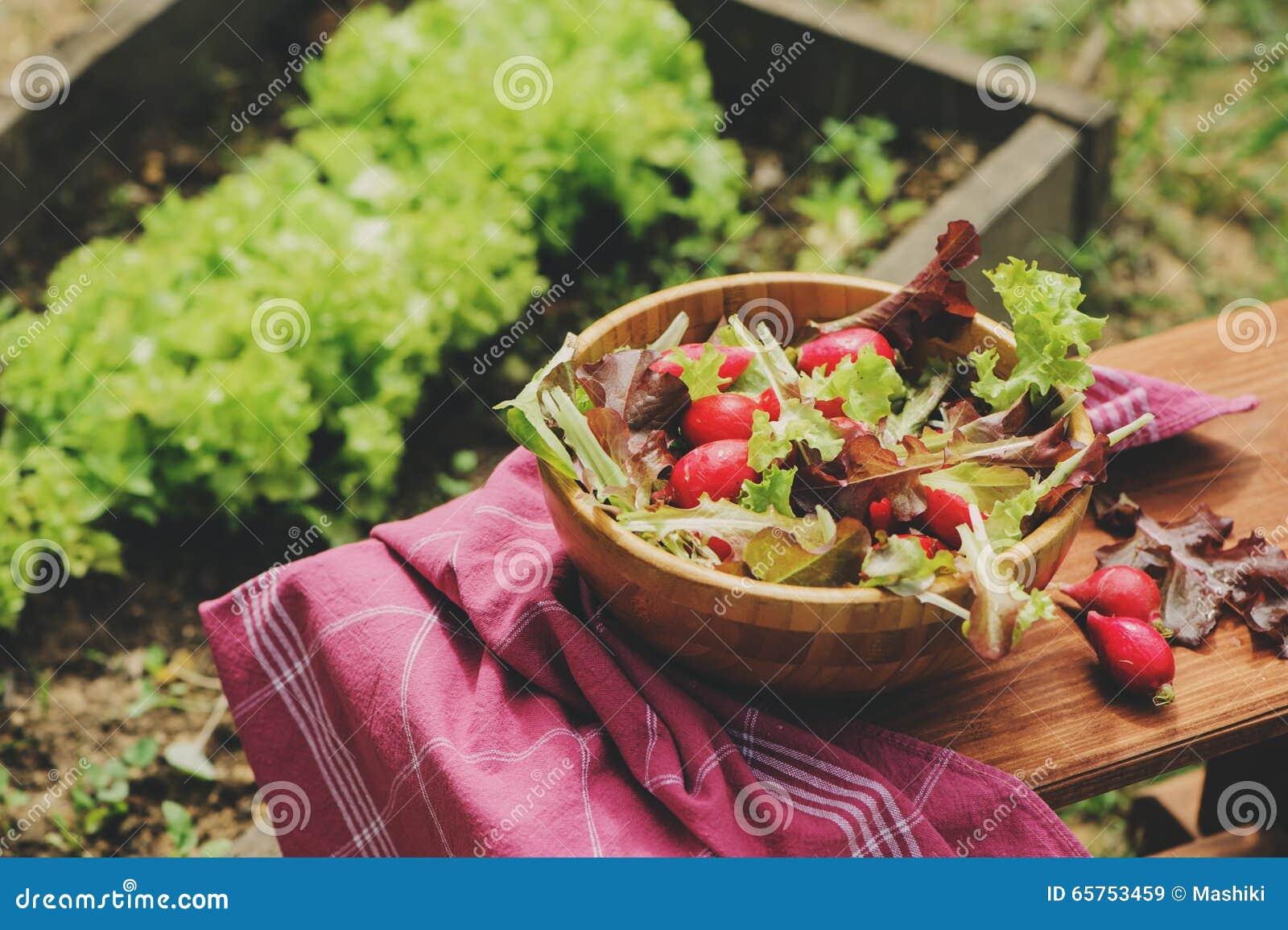 Salade rougeâtre et verte de ferme de croissance fraîche de maison dans le plat en bois,
