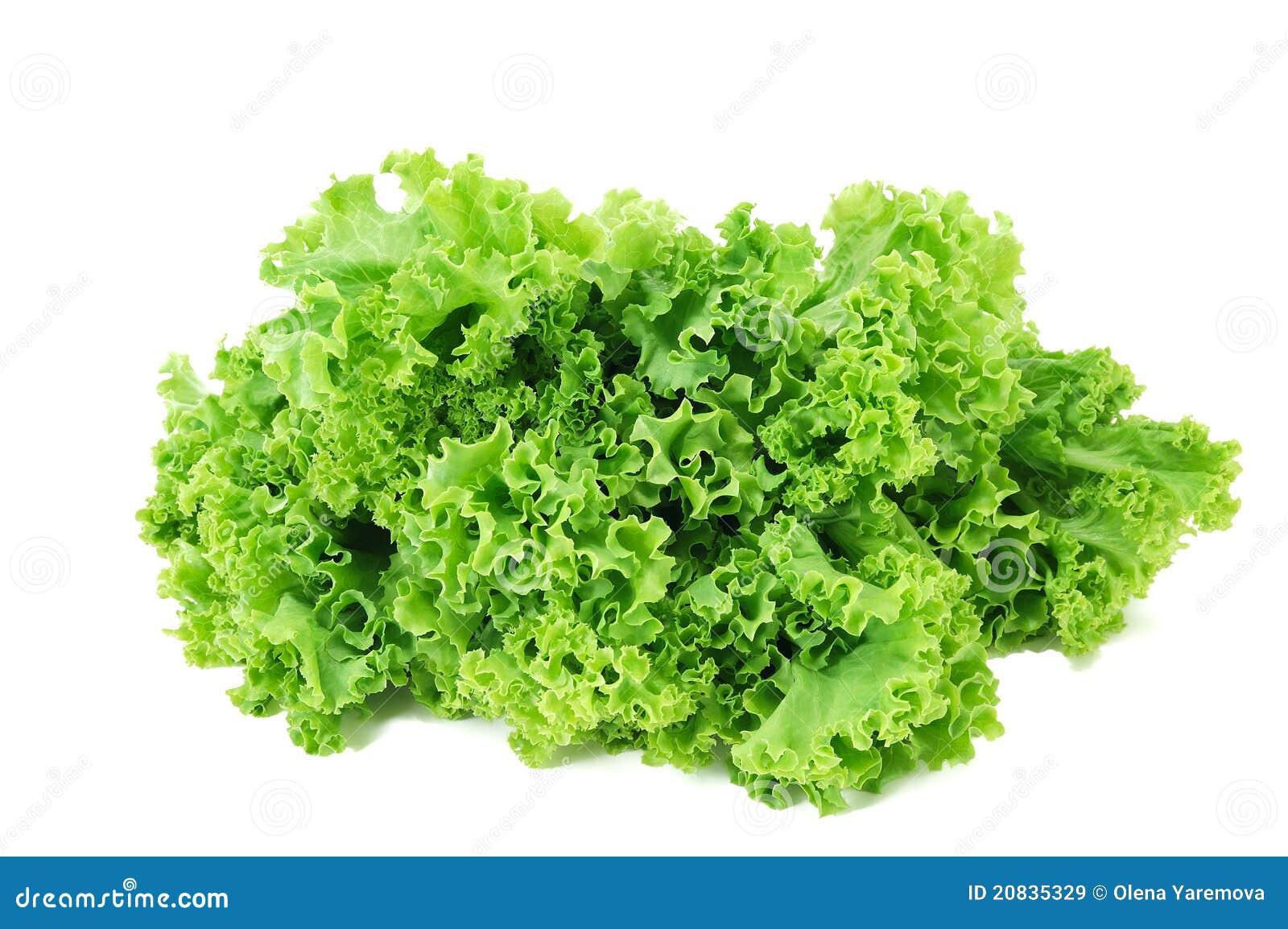 salade verte fraîche image stock. image du salade, jardin - 20835329