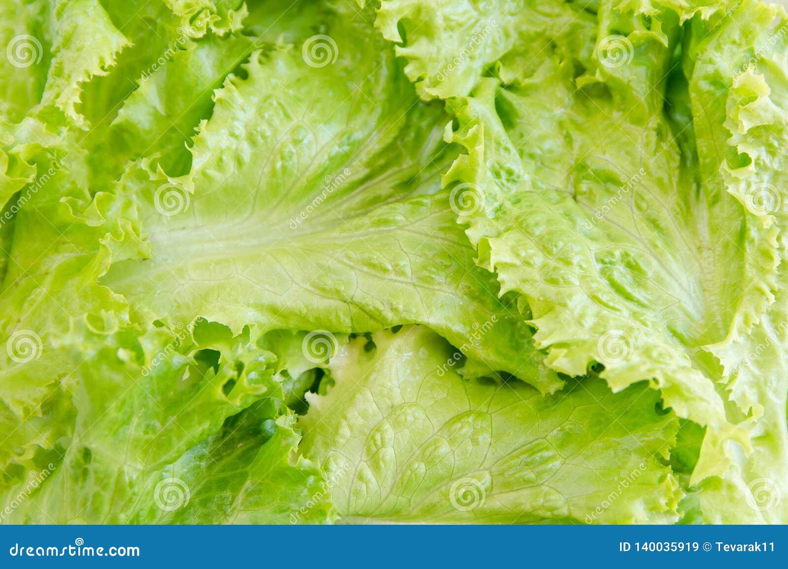 Saladeblad Slaachtergrond De achtergrond van groenten