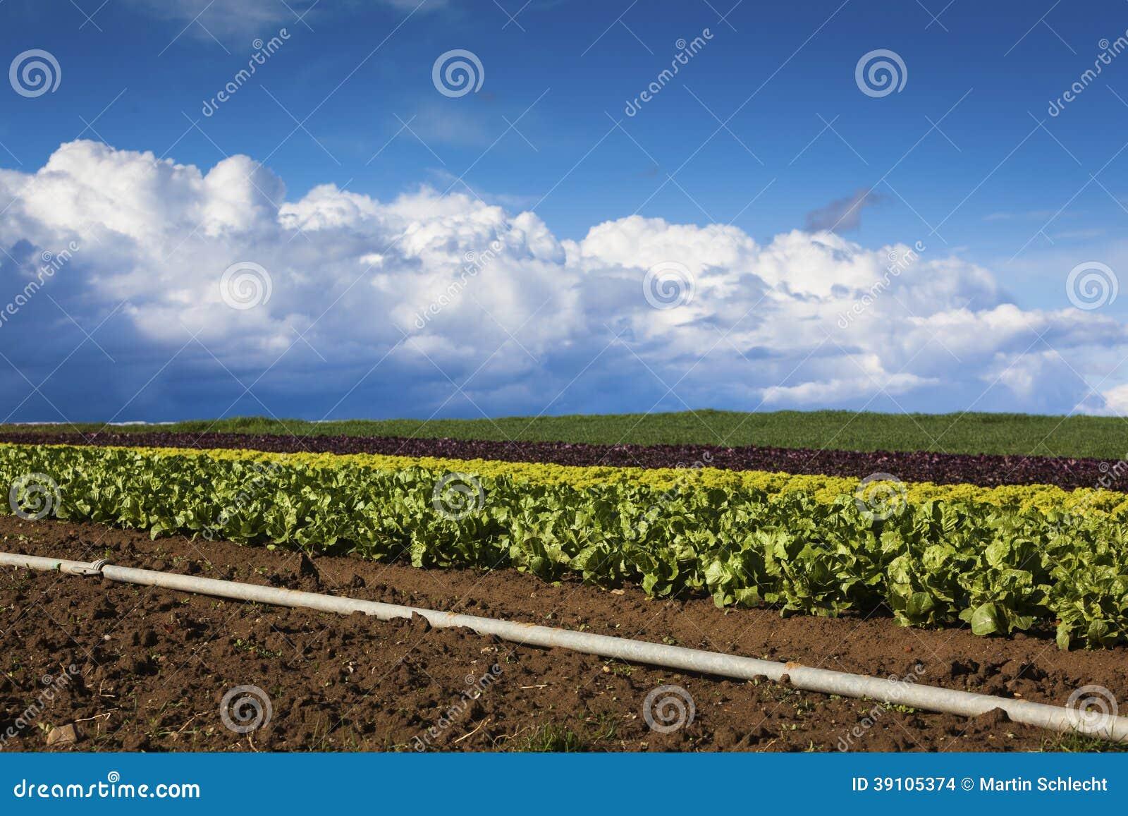 Saladegebied