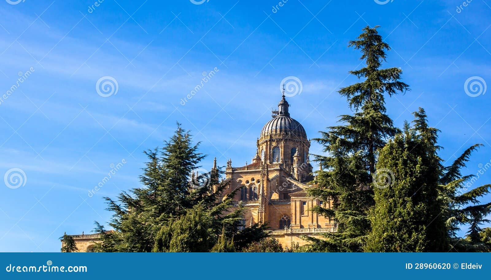 Salamanca drzewa i katedra