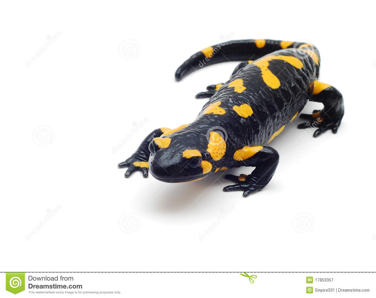 salamander royalty free stock photography image 17853357 Dog Clip Art Dog Clip Art