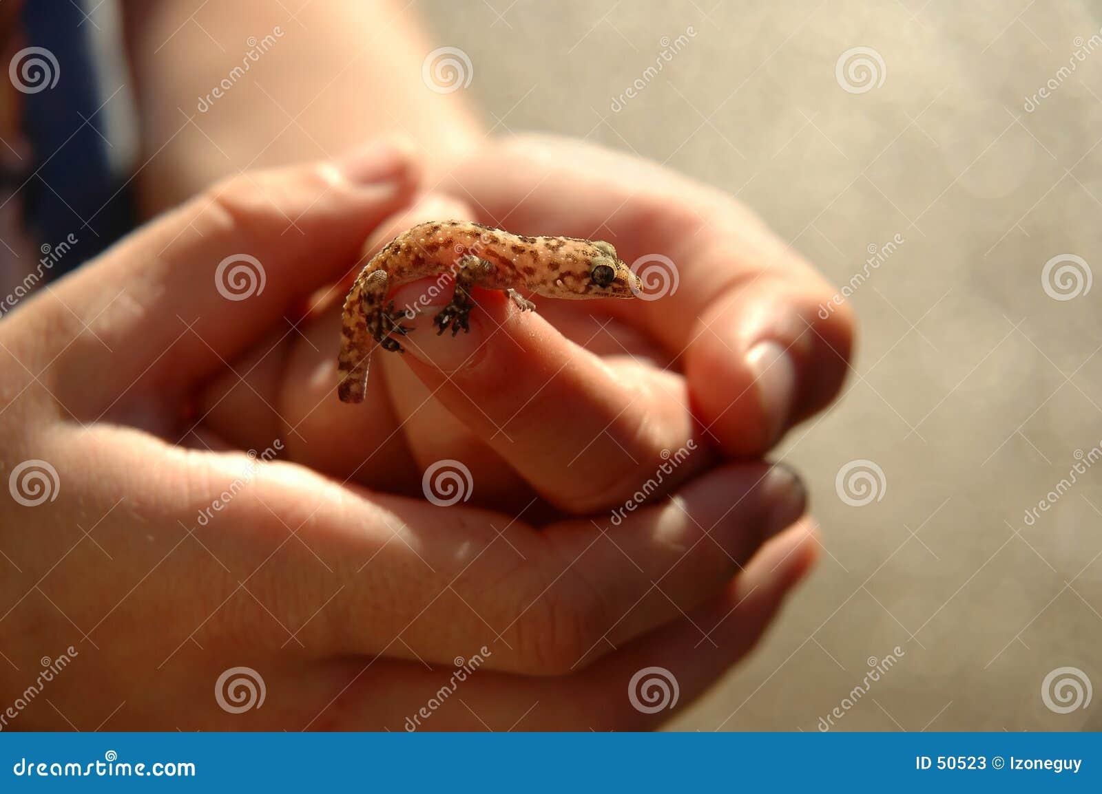Salamander Back Lit