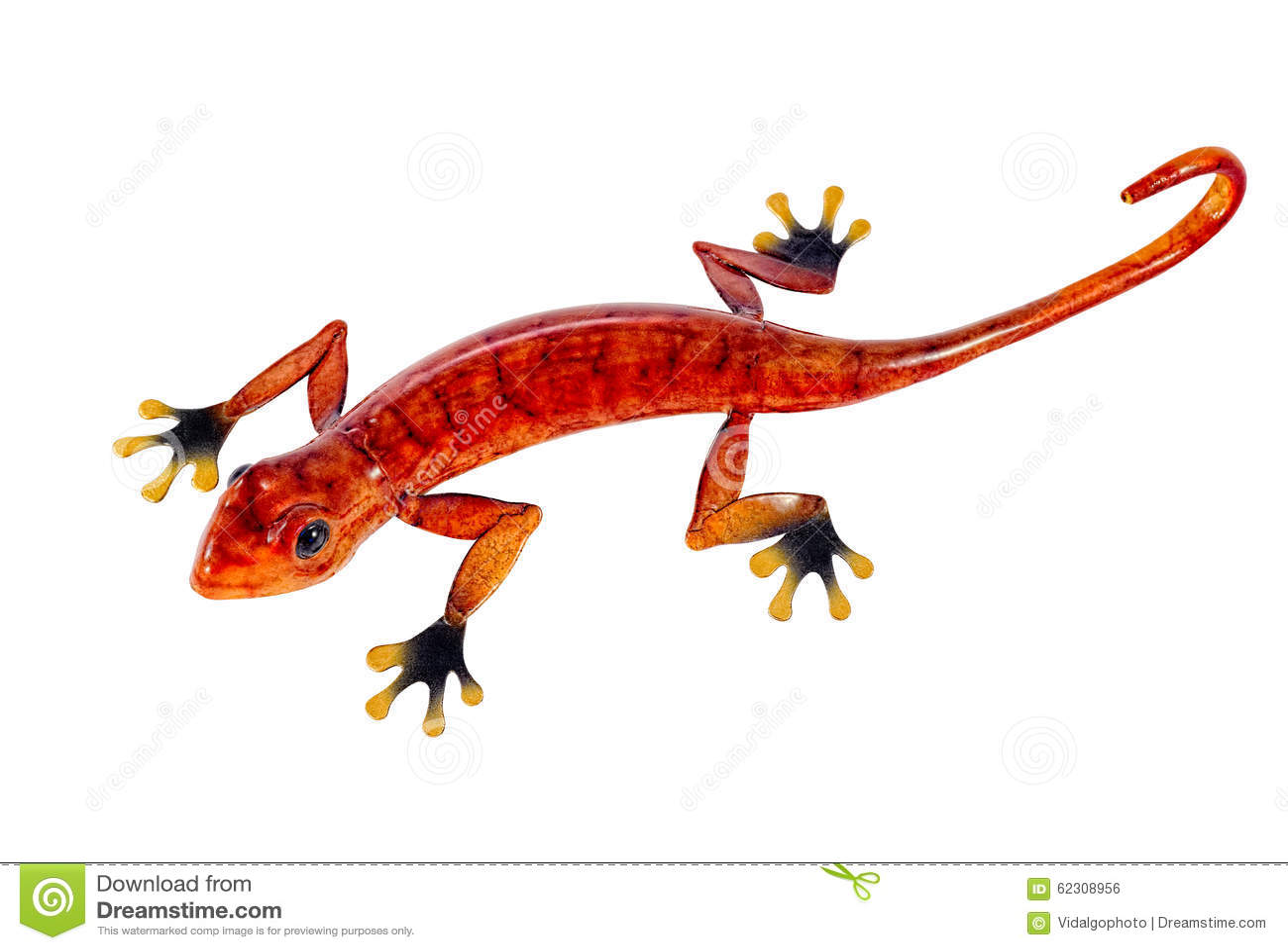 salamander white background - photo #22