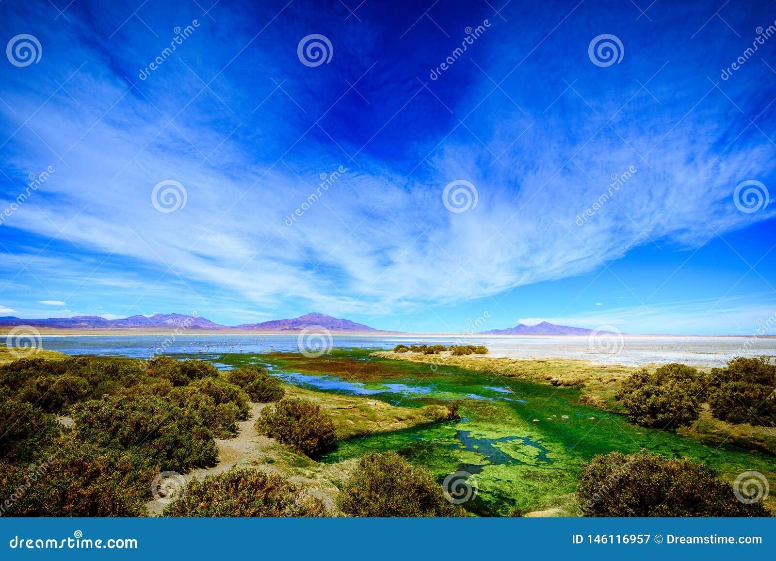 Salar de Tara, San Pedro Atacama, Chile
