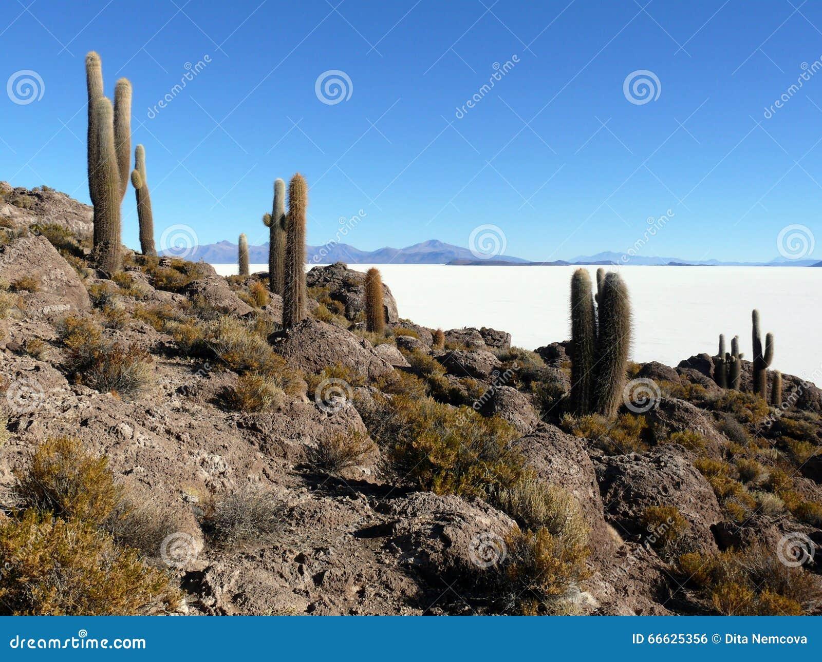 Salar DE Uyuni in Bolivië