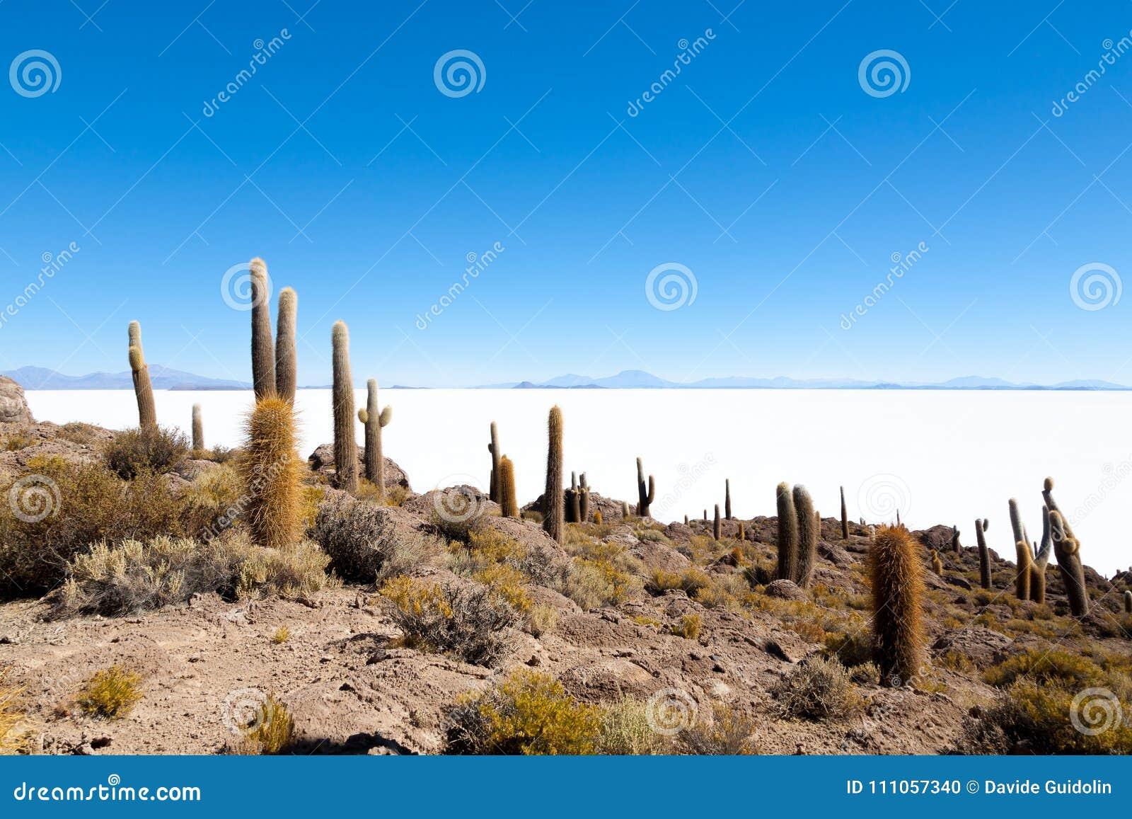 Salar De Uyuni widok od Isla Incahuasi