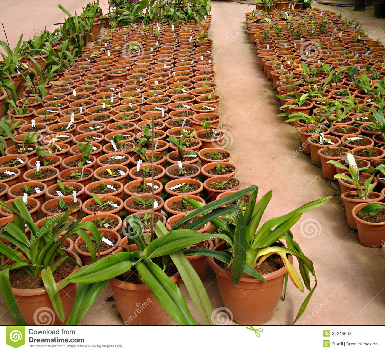 Sale Of Small Plants In Pots In A Green House Stock