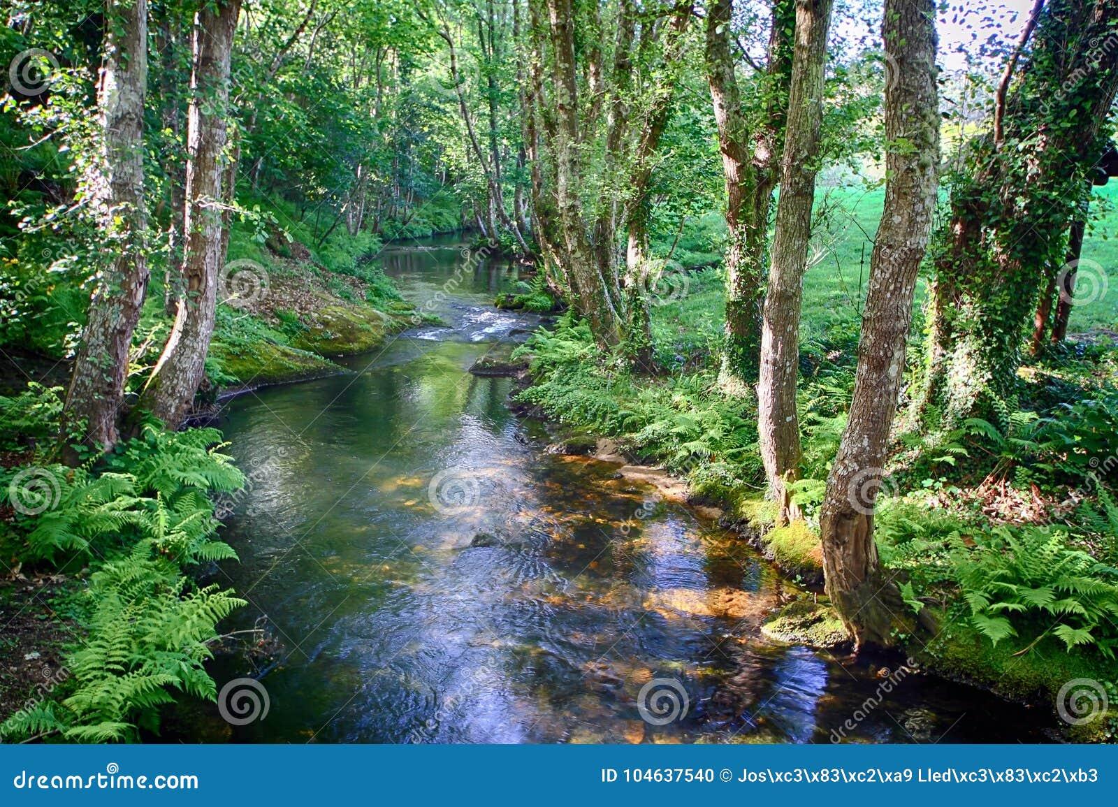 Download Salgadelosril En Bos In De Provincie Van Lugo In Spanje Stock Foto - Afbeelding bestaande uit schoonheid, wildernis: 104637540