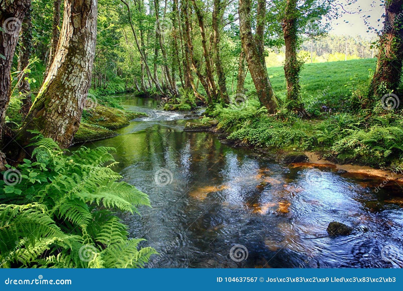Download Salgadelosril En Bos In De Provincie Van Lugo In Spanje Stock Afbeelding - Afbeelding bestaande uit tuin, scène: 104637567