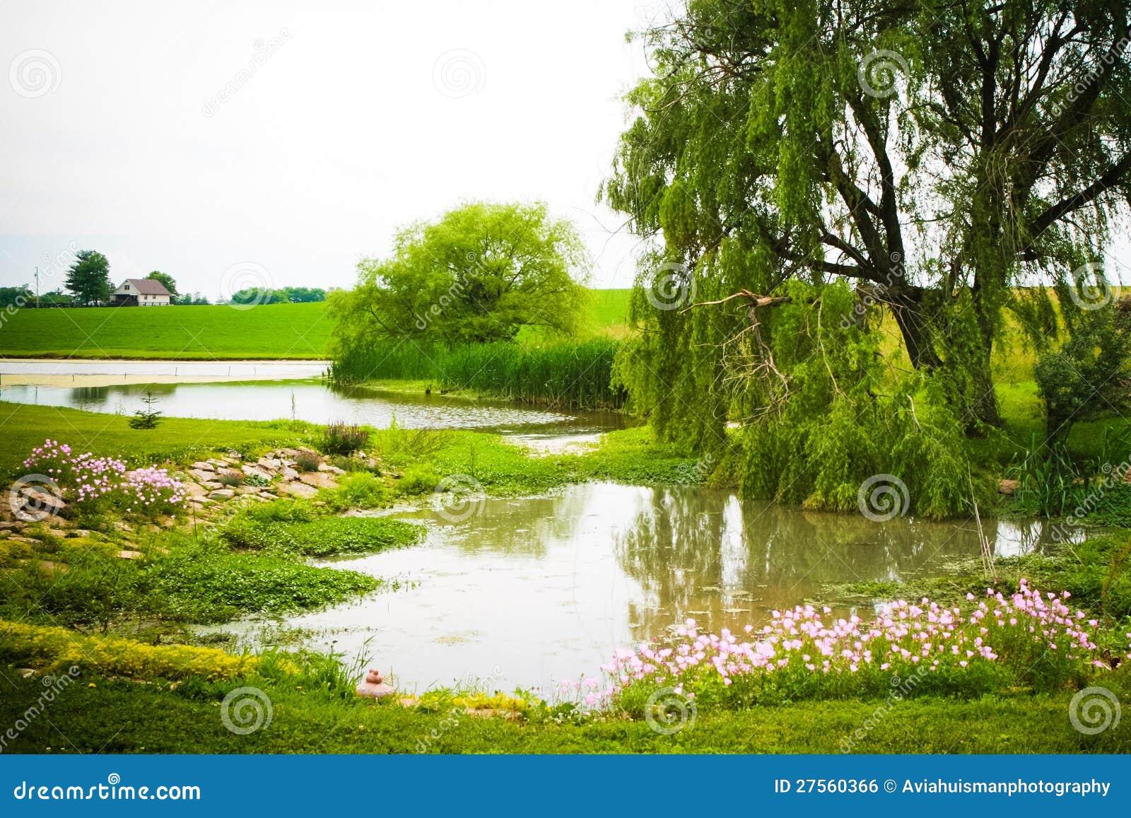 Salgueiro pela lagoa