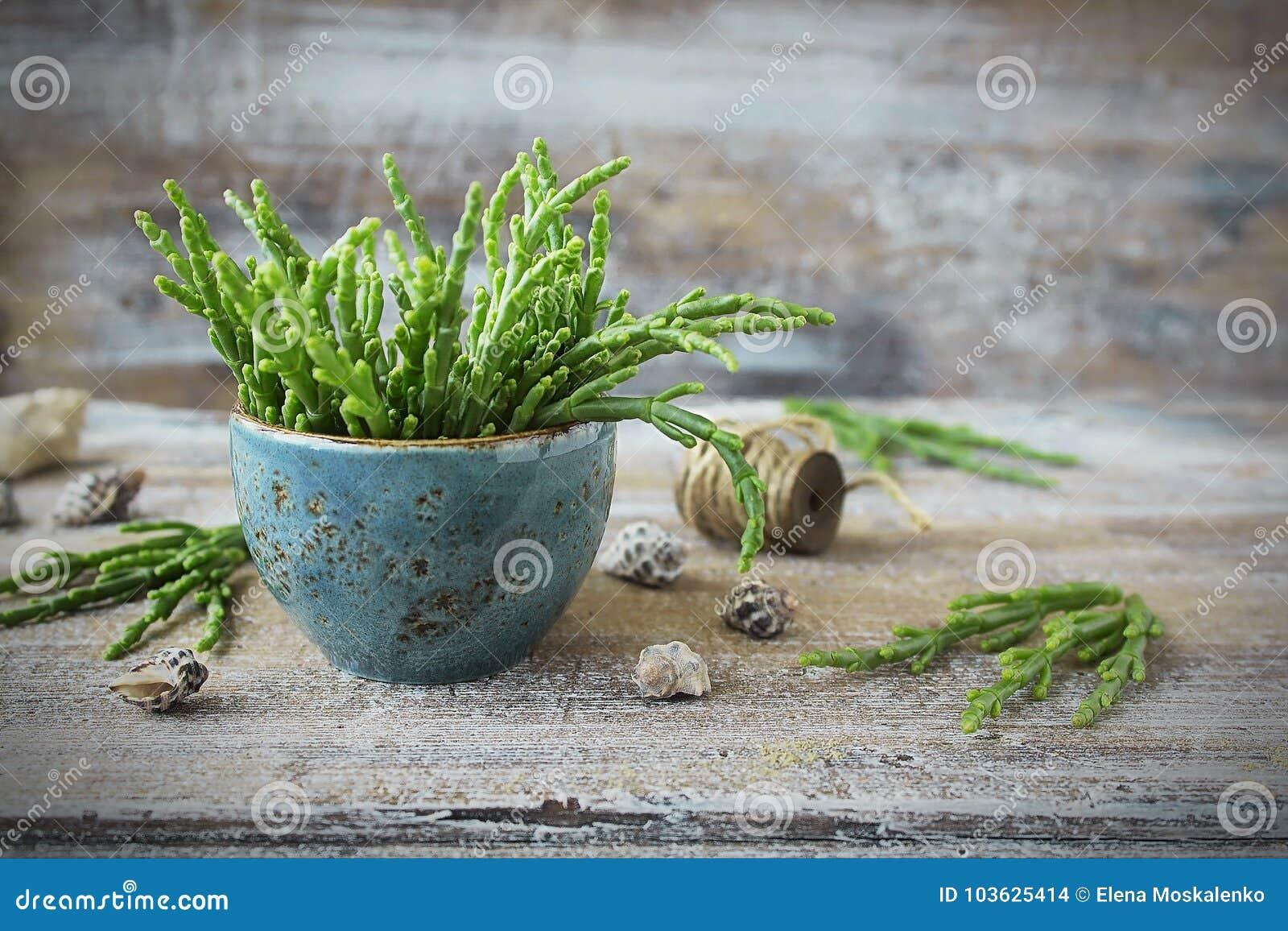 Salicornia frais - l asperge de mer