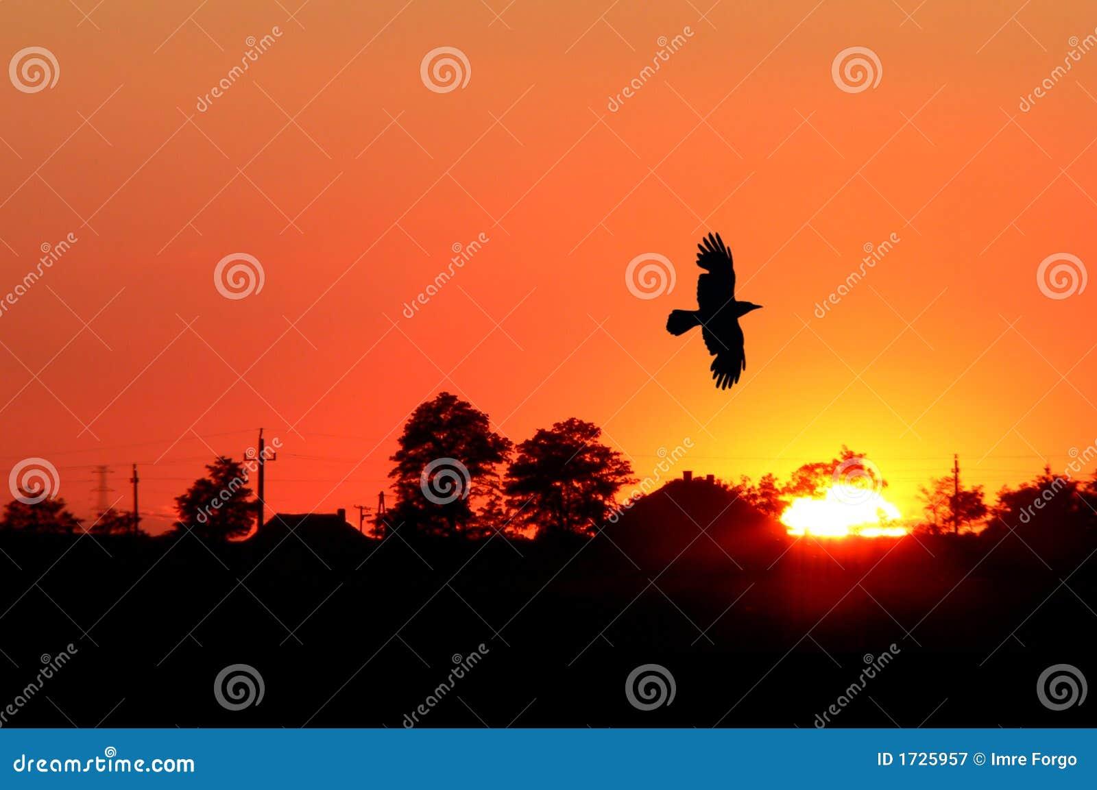 Salida del sol anaranjada