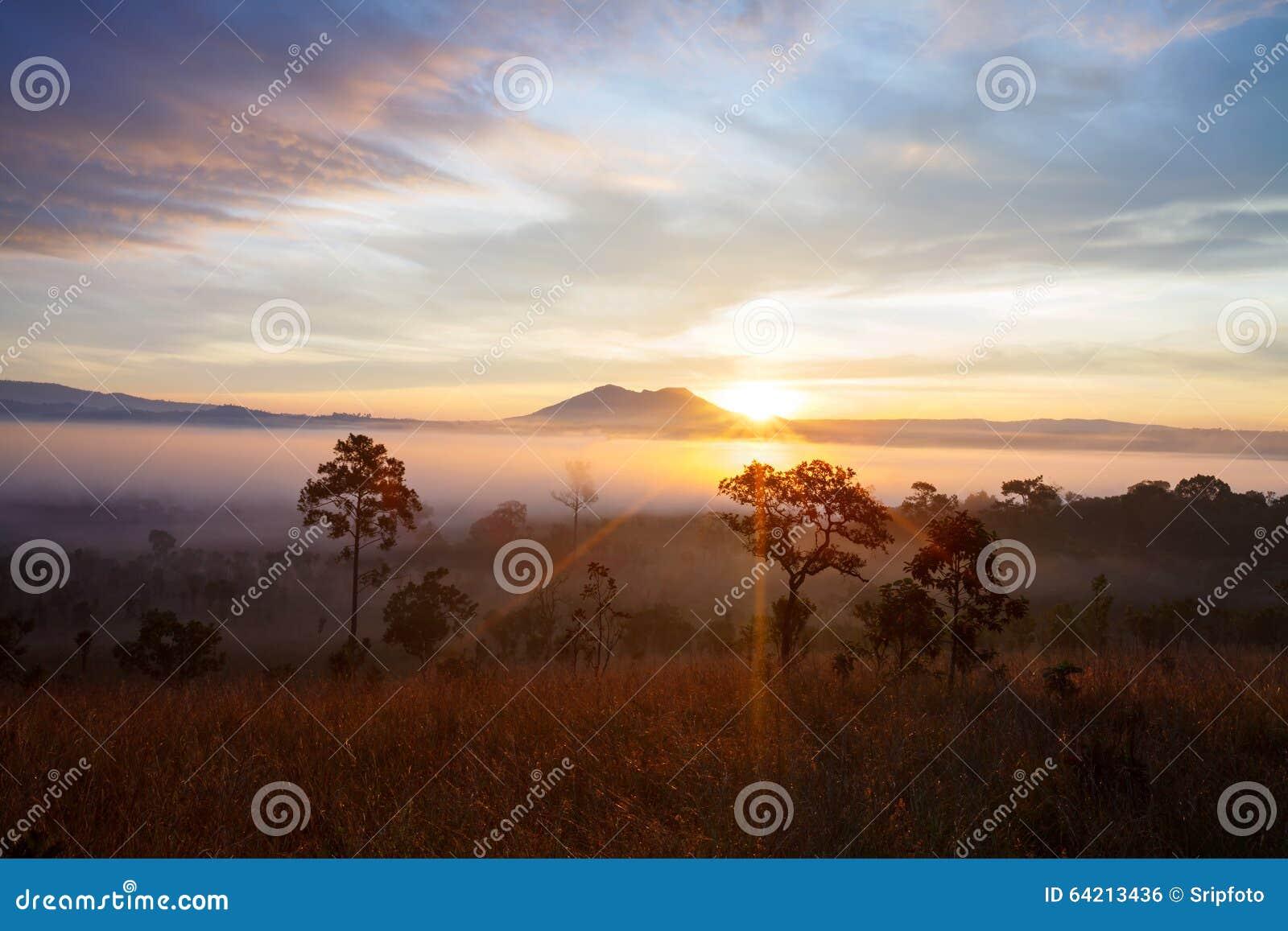 Salida del sol brumosa de la mañana en el parque nacional Phetch de Thung Salang Luang