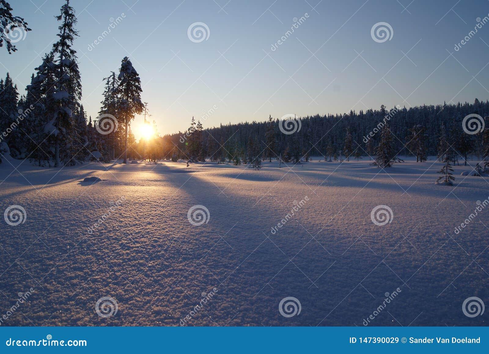 Salida del sol de la nieve sobre bosque en Laponia