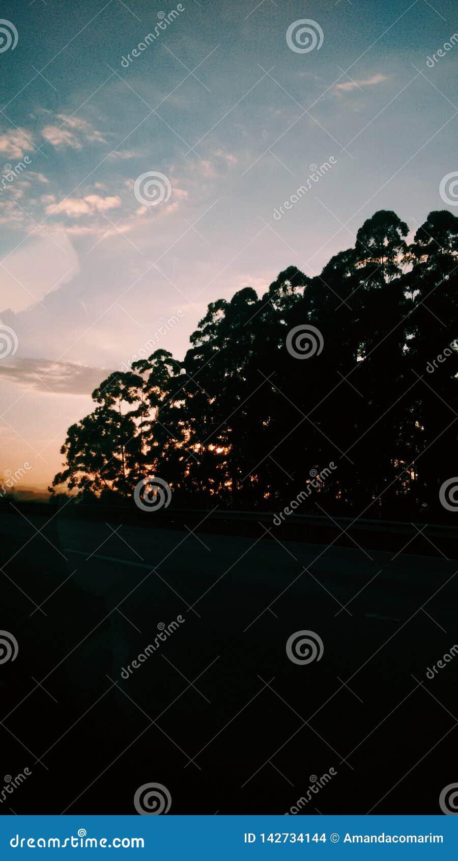 Salida del sol detrás del árbol en el camino