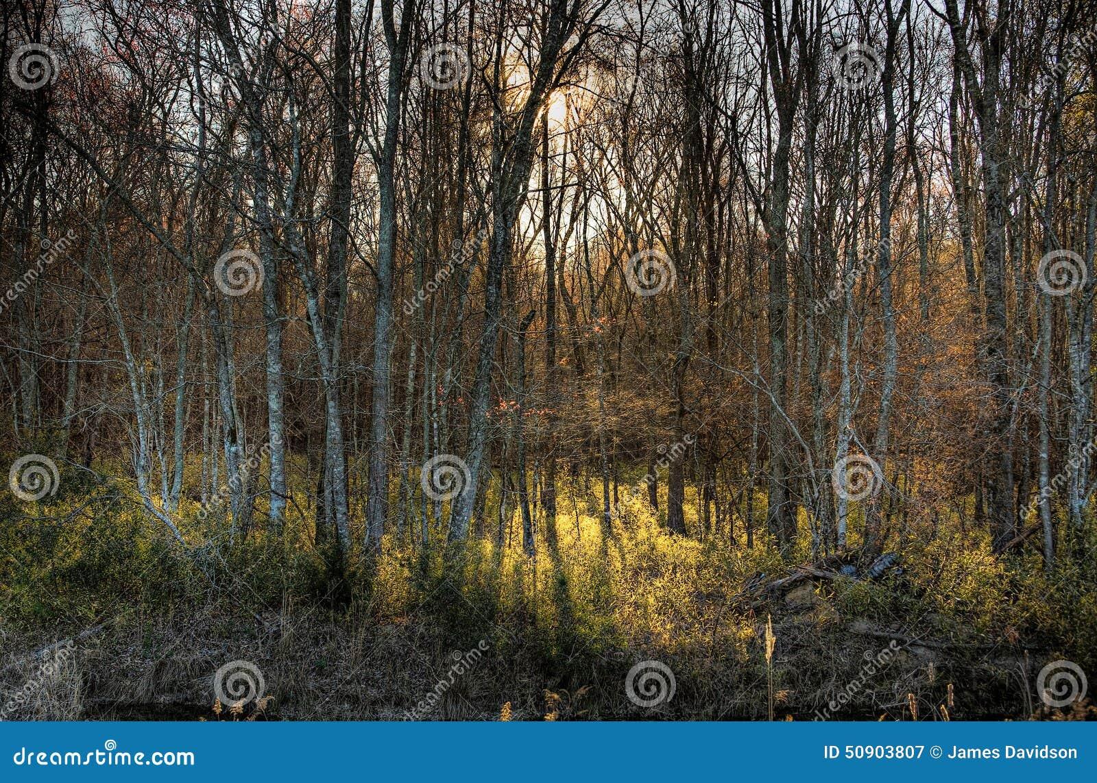 Salida del sol en el bosque