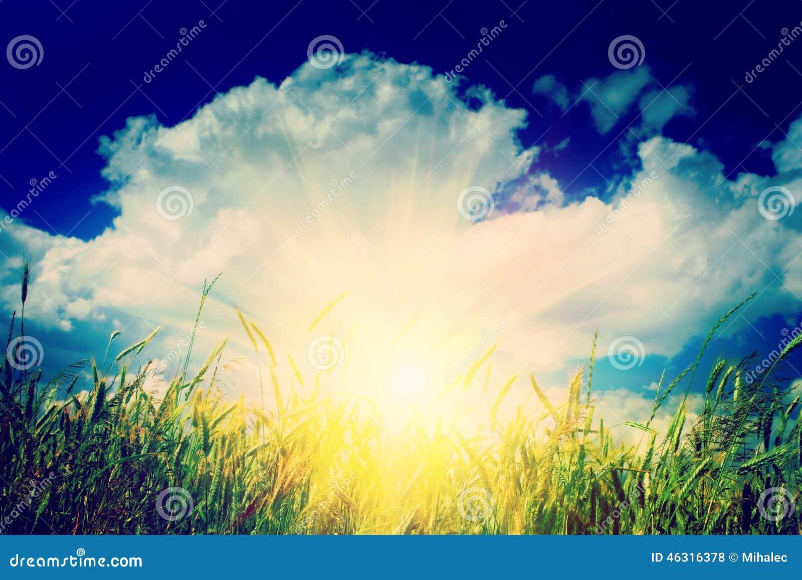 Salida del sol en el montante del instagram del campo de trigo