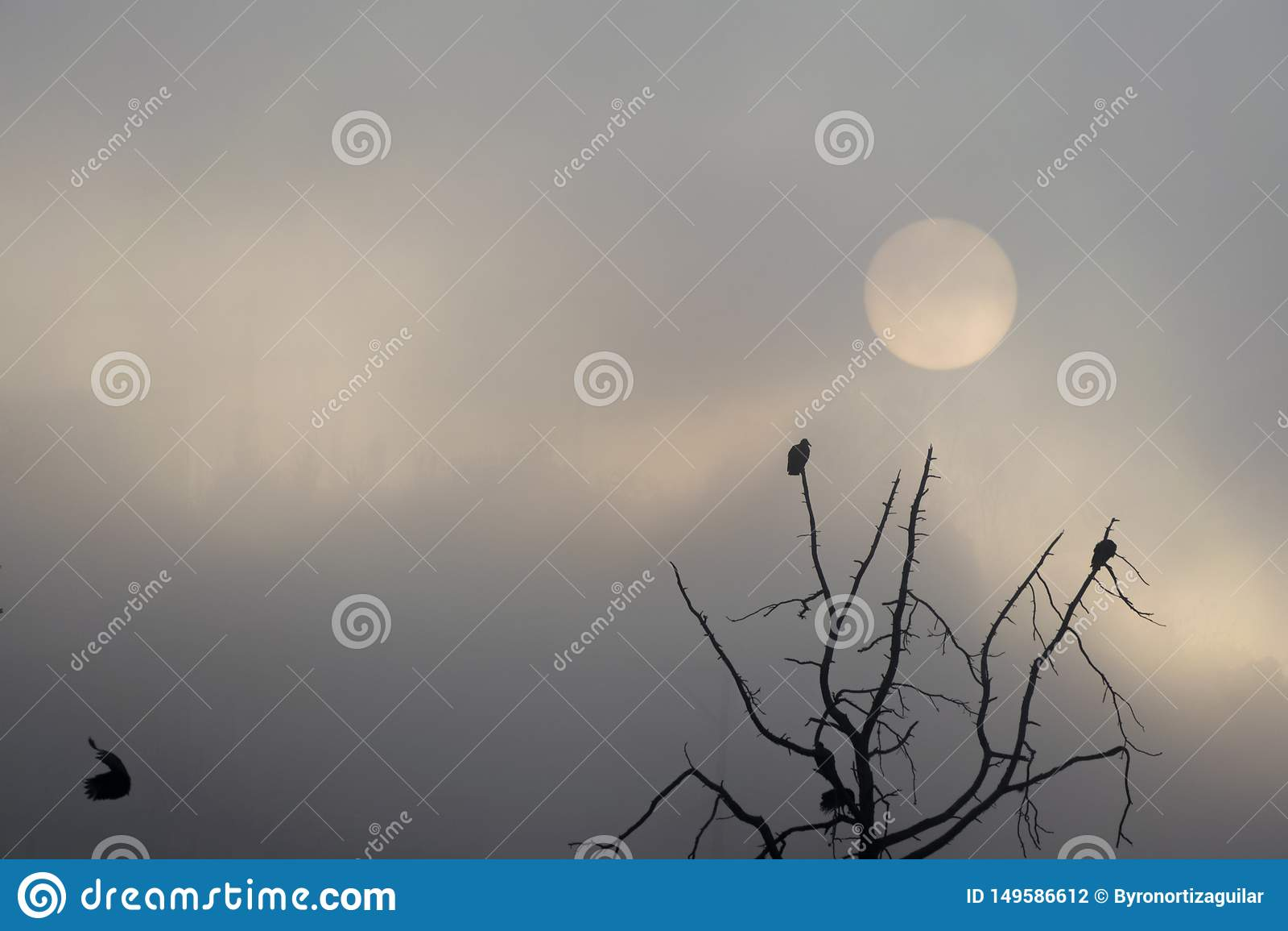 Salida del sol en Guatemala, ?rbol con los halcones que sacan vuelo Sun en la niebla