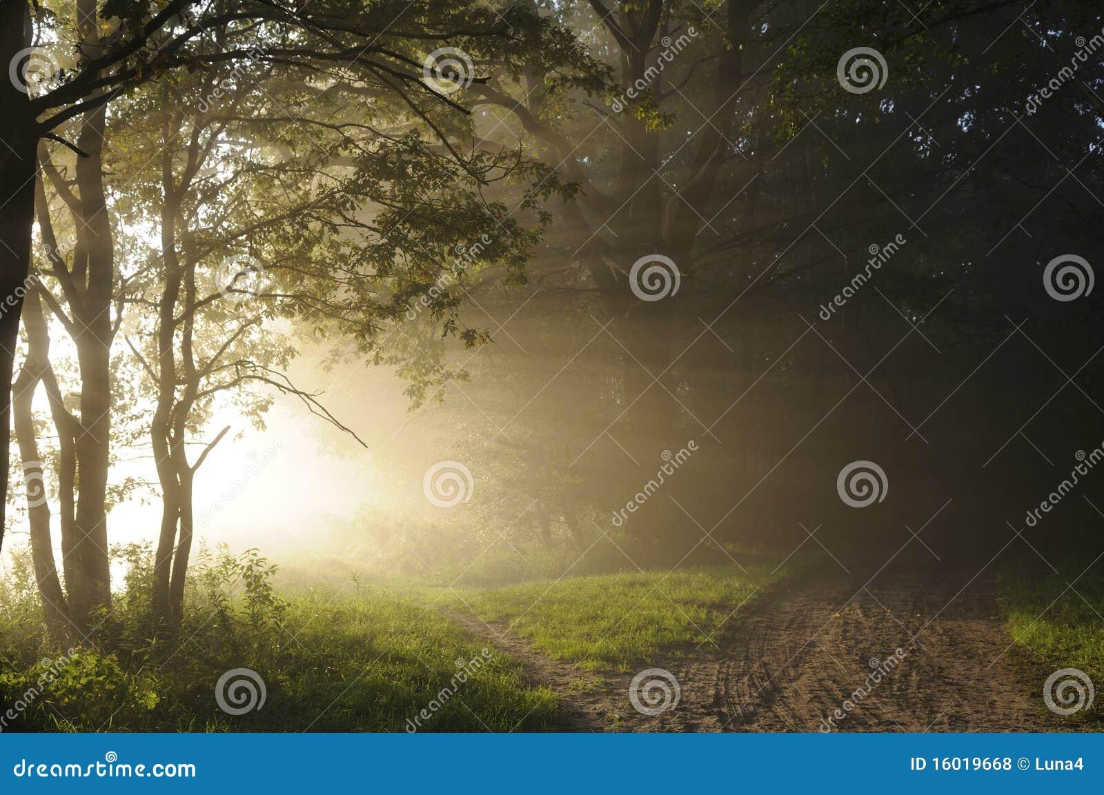 Salida del sol en las maderas