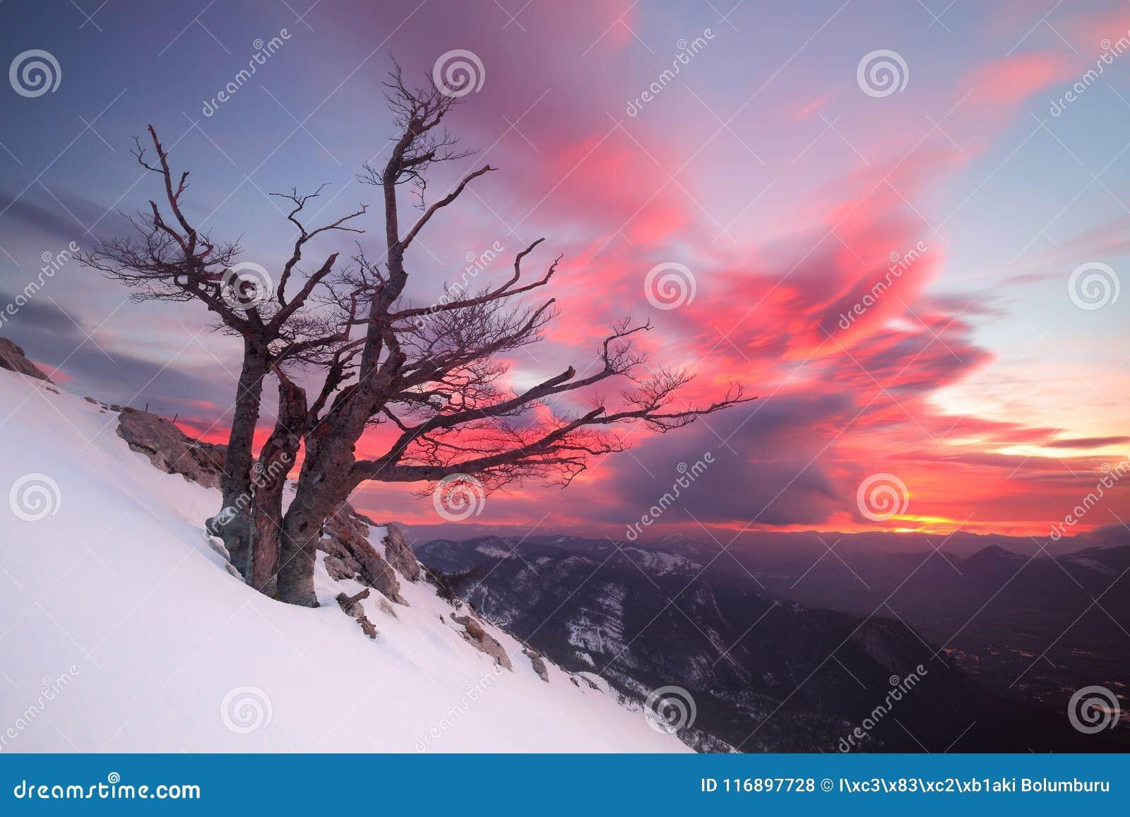 Salida del sol hermosa sobre un árbol solitario en la nieve